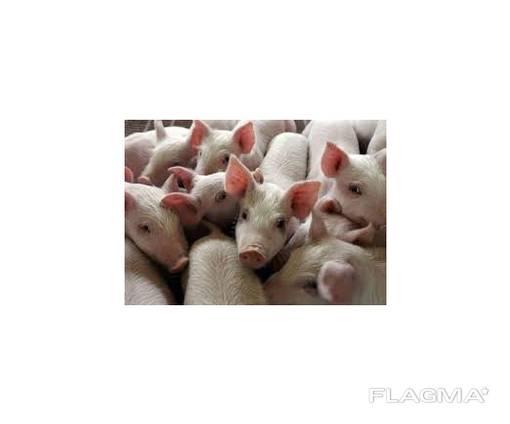 Продам животноводческую ферму