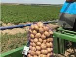 Продаммолодой картофельхорошего качества. Сорт - фото 1