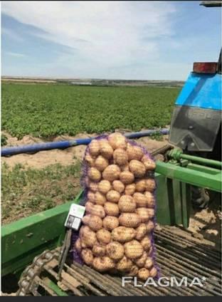 Продаммолодой картофельхорошего качества. Сорт
