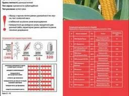 Продаю посевной материал ЛГ 2195 кукуруза Лимагрейн