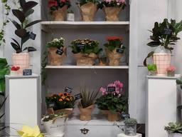 Продаж бізнесу. Магазин квітів. Терміново