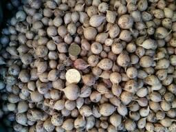 Продажа чеснока Посадочный материал сортового чеснока
