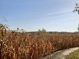 Продажа фермерского хозяйства 104га