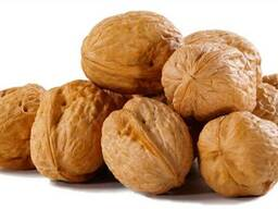 Продажа грецкого ореха оптом (кругляк) Винницкая область