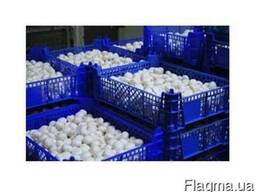 Продажа грибов шампиньонов со своей грибной фермы. Мелкий и