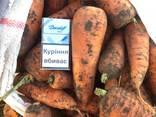 Продажа Опт Морковь/ Свекла - фото 3