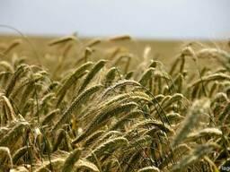 Продажа сельхозпредприятий