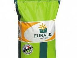 Продажа семян подсолнечника и кукурузы Тунка, Неома, ЛГ 5555