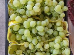 Продажа винограда опт