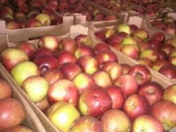 Продажа яблок для экспорта Винницкая область