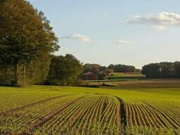 Продажа земли 1, 99га и 1, 79 га. Личное сельское хозяйство . Полтавский р-н.