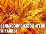 Производители зерновых, зернобобовых, масличных культур 2019 - фото 1