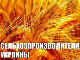 Производители зерновых, зернобобовых, масличных культур 2019