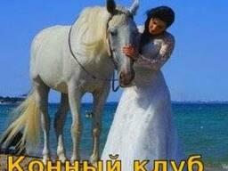 Прокат аренда белой лошади, пони, ослика