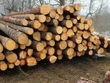Пропонуємо лісоматеріали круглі (пиловнийк хвойний) - фото 1