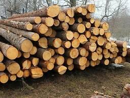 Пропонуємо лісоматеріали круглі (пиловнийк хвойний)