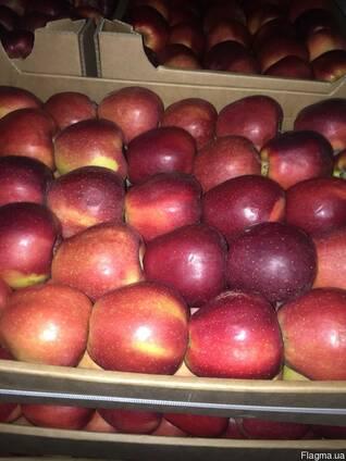 Яблука великим оптом