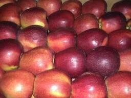 Продам яблука Айдаред