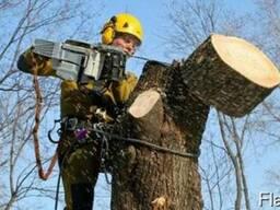 Проводим корчевание деревьев и садов любой сложности.