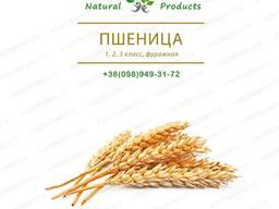 Пшеница 1, 2, 3 класс, фуражная. Продам (205$)