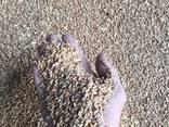 Пшеница органическая - фото 1