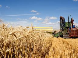 Пшеница 12, 5 CIF