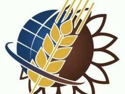Пшеница 2,3,6кл,кукуруза, ячмень, подсолнечник! Самовывоз!