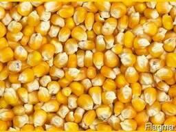 Пшеница, кукуруза - фуражная для кормовых целей. - photo 3