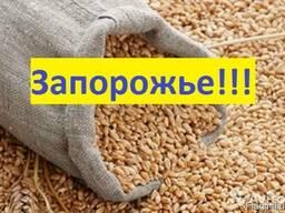 Куплю Пшеницу Запорожье Украина