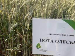 Пшеница Нота Одесская