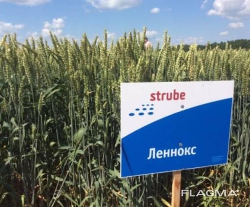 Пшеница Озимая Леннокс(двуручка)