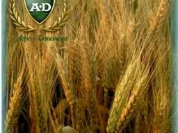 Пшеница озимая Журавка Одесская