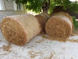 Пшеничная солома в тюках урожая 2021 года