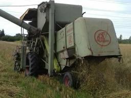 Пшениця 60т