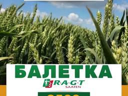 Пшениця Балетка Ірепродукція
