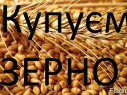 Пшениця Купуємо