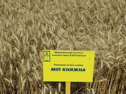 Пшениця озима МІП Княжна