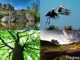 Путешествие Трикратским лесом