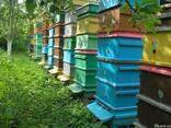 Пыльца пчелиная с Прикарпатья 2018г. - фото 1