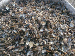 Ракушка речная кормовая(кальций)