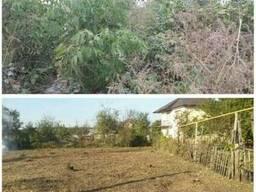 Расчистка участка, Вырубка дикой поросли, Спиливание деревье
