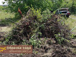 Расчистка участков, расчистка от поросли, расчистка от деревьев - фото 2