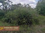 Расчистка участков, расчистка от поросли, расчистка от деревьев - фото 5