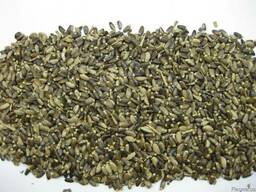 Расторопша пятнистая, семена