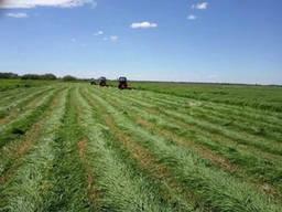 Реализуем и принимаем заказы на сено, солому, гранулы, зерно