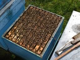 Реализуем пчелопакеты в наличии есть 200 пакетов 4 рамки расплода матка 2020 года продажа