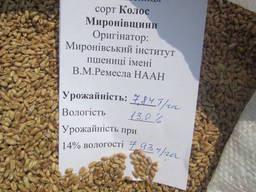 Реалізуємо елітну пшеницю від виробника
