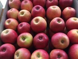 Реалізуємо яблука ОПТ