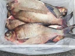 Речная рыба опт. Карась, густера, синец, плотва, лещ и др.