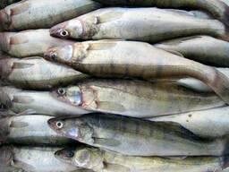 Речная рыба в ассортименте